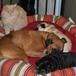 Sherman, Rodney, Slugger, Fuzz