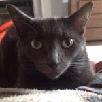 tail-blazers-kelowna-cat2