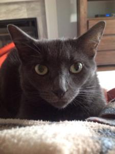 Tail Blazers Cat